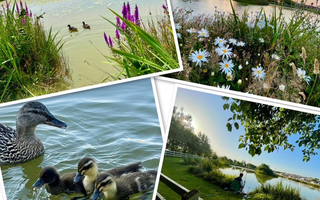 Loving the Lake at Warcombe