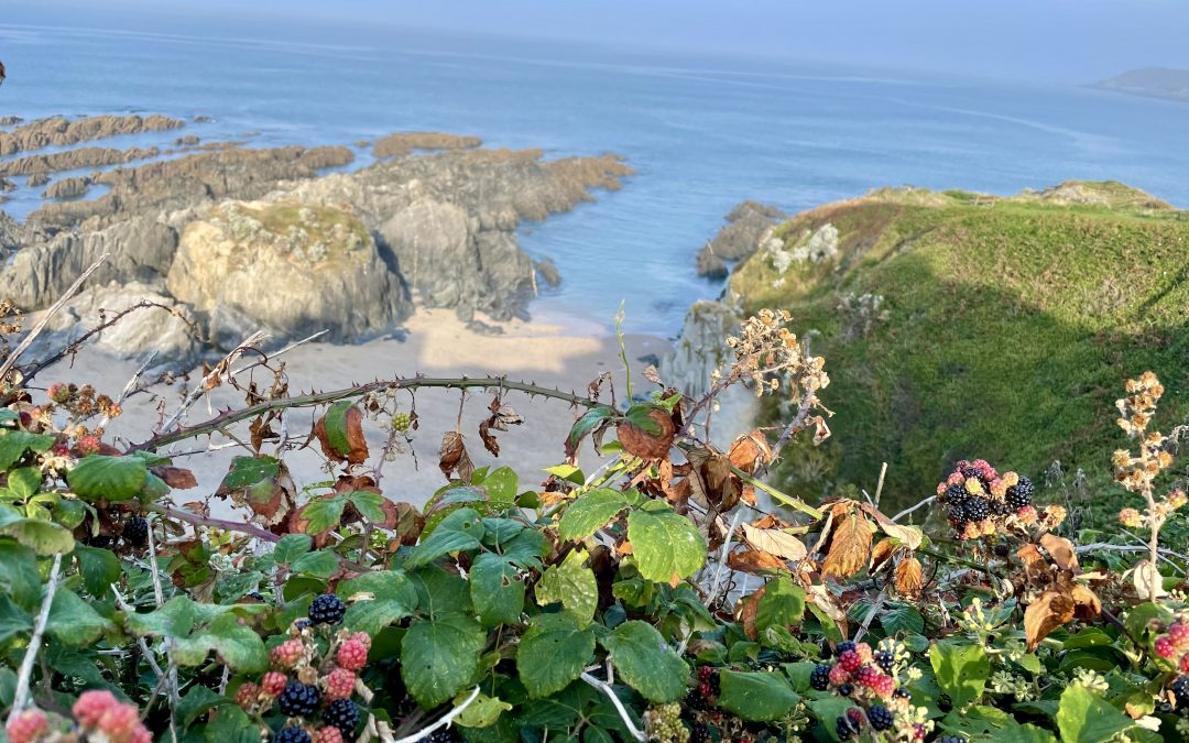 Savouring September – Boots, Brambles, Surf and Sloes!